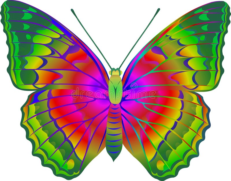 Download Butterfly stock illustration. Image of feeler, soul, sitting - 7158893