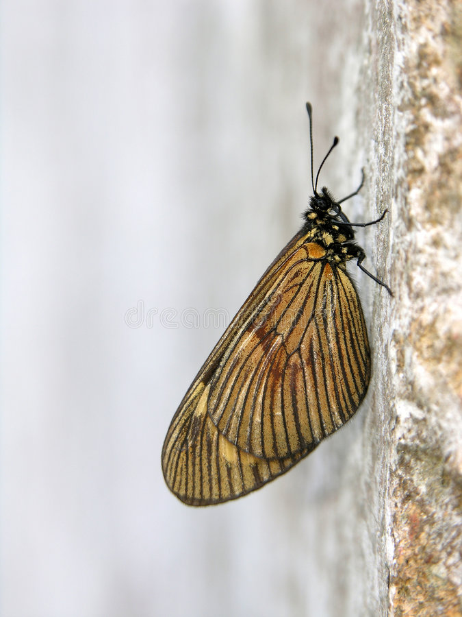 Butterfly stock image
