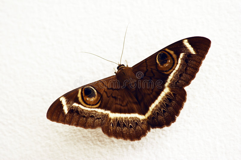 Download Butterfly stock photo. Image of wall, house, moth, wings - 749934