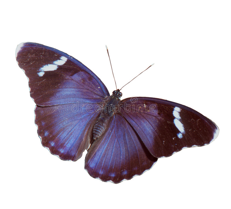 Download Butterfly stock image. Image of blue, king, euphaedra, butterflies - 76875