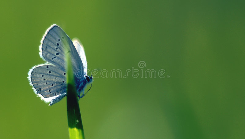 Butterfly green background beauty in nature royalty free stock image