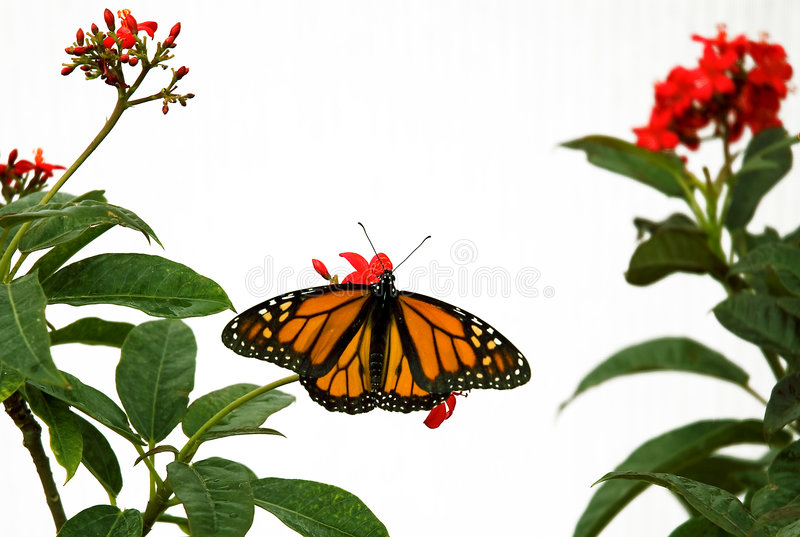 Butterfly 9 stock photos