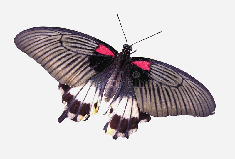 Download Butterfly stock photo. Image of colorful, wing, brown, insect - 95606