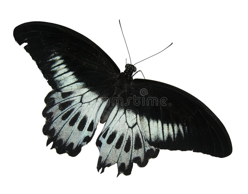 Download Butterfly stock image. Image of makro, rain, tropical, light - 96917