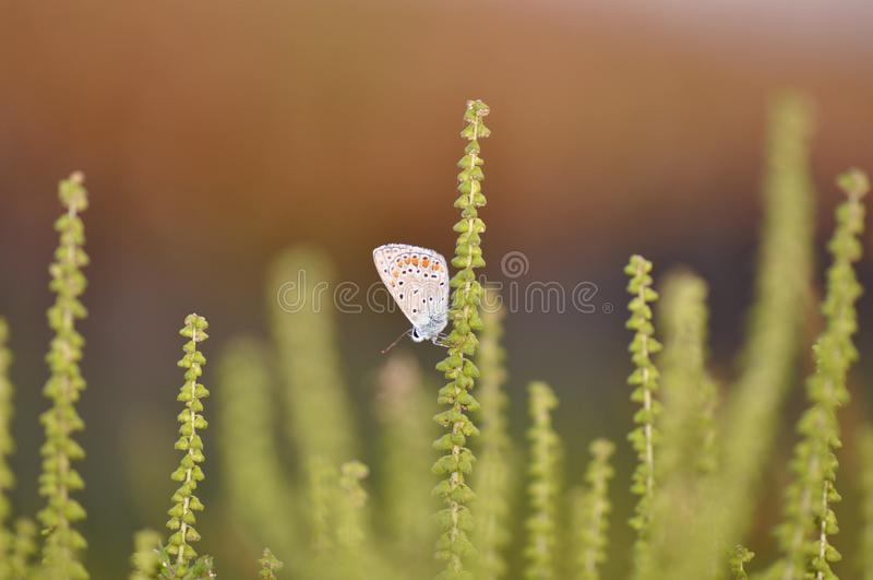 Butterfly on ambrosia stock image