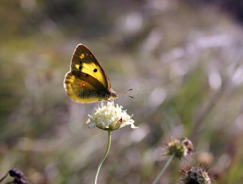 Butterfly at the autumn dried grass. stock images
