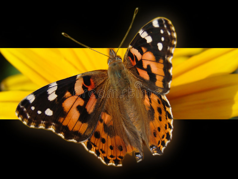 Download Butterfly background stock illustration. Image of outdoors - 888103