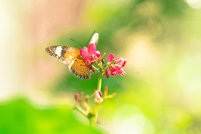 The butterfly background in park of Thailand stock photo