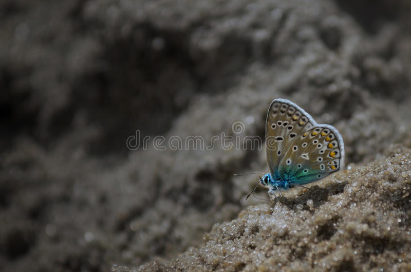 Butterfly on beach stock photo
