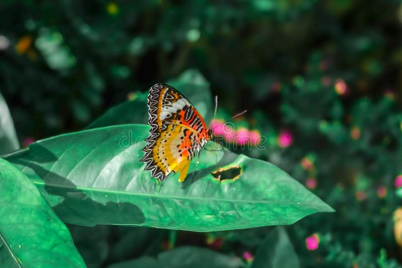 Butterfly. Beautiful Tropical Butterfly On Blurred Nature Background ...