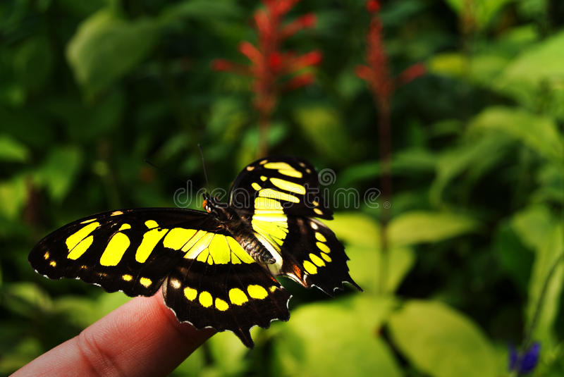 Butterfly. Beautifull butterfly at Blijdorp Zoo Rotterdam royalty free stock image