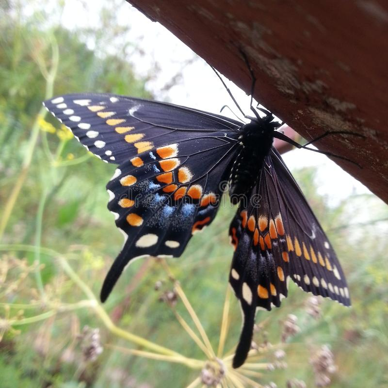 butterfly~betterfly~beautifully photo libre de droits