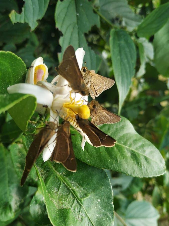 Butterfly-Blütengrün stockfotos