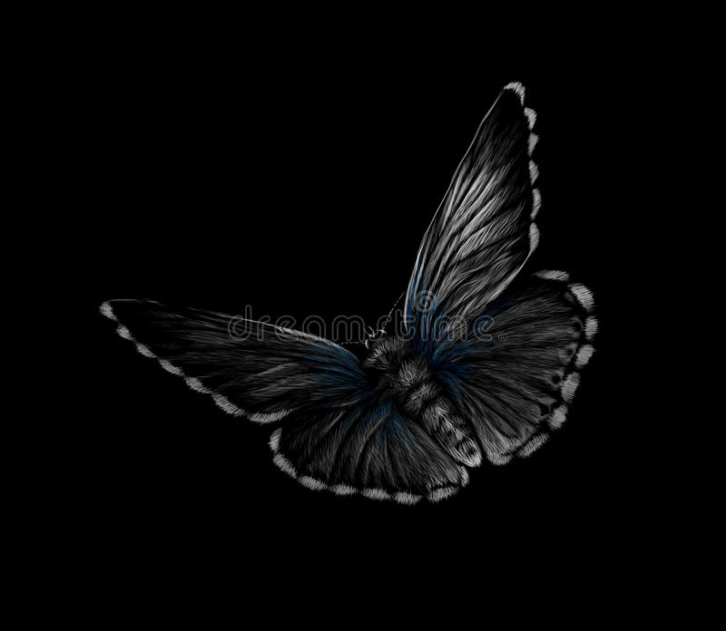 Butterfly on a black background, hand drawn royalty free illustration