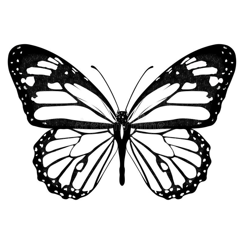 Butterfly black and white, view from above, isolated on white background, vector insect, monochrome illustration, coloring book, b vector illustration