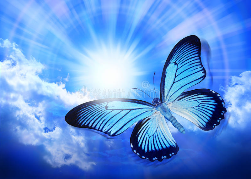 Butterfly Blue Sky Sun Nature. A blue butterfly (Papilio Salmoxis) flying through a sunny sky