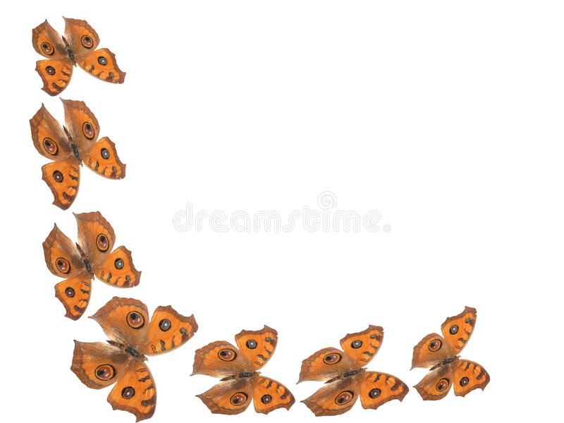 Butterfly border background stock photography