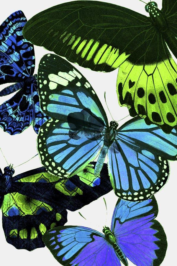 Butterfly Botanical. Spring botanical butterfly wallpaper design vector illustration