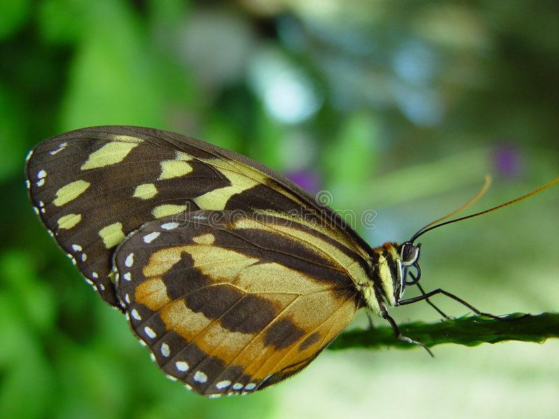 Butterfly on branch royalty free stock image