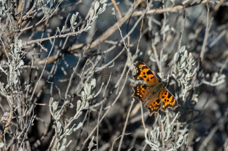 Butterfly on a bush royalty free stock photos