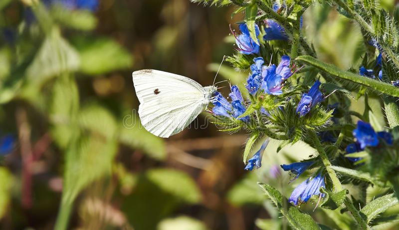 Download Butterfly stock image. Image of green, sitting, summer - 31922753