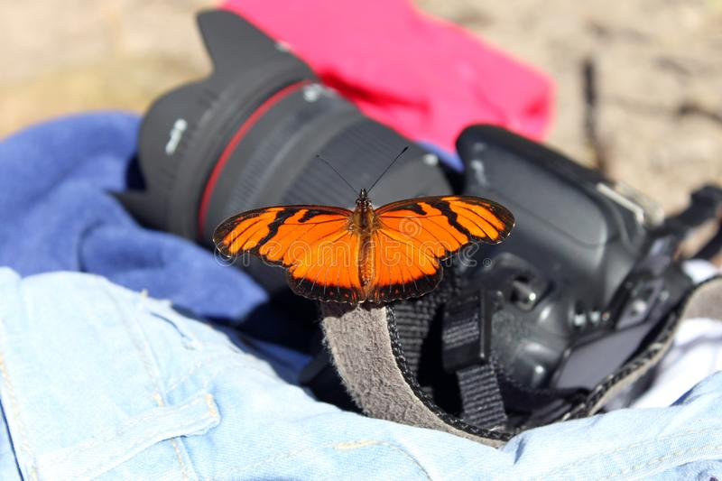 Butterfly in the Camera. A pretty tiny Orange butterfly arrived in my video equipaments stock photos