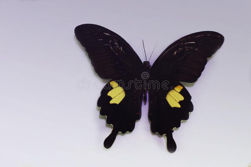 Butterfly on a clean background royalty free stock photography