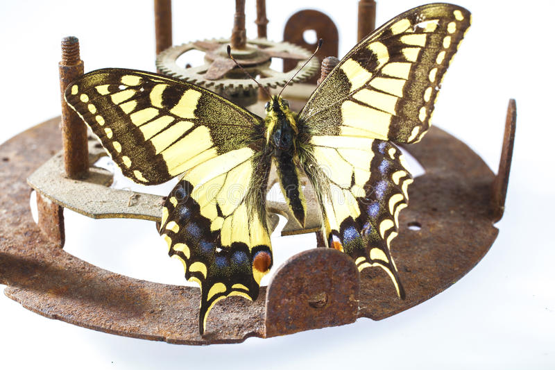 Butterfly on clock mechanism stock image