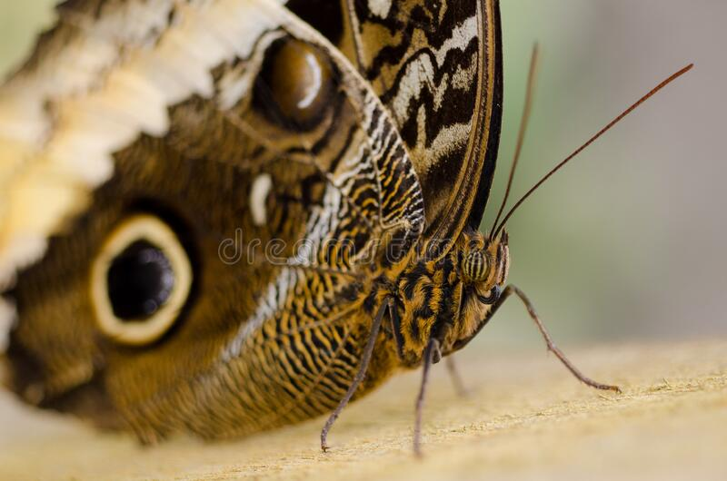 Butterfly Close Up Free Public Domain Cc0 Image