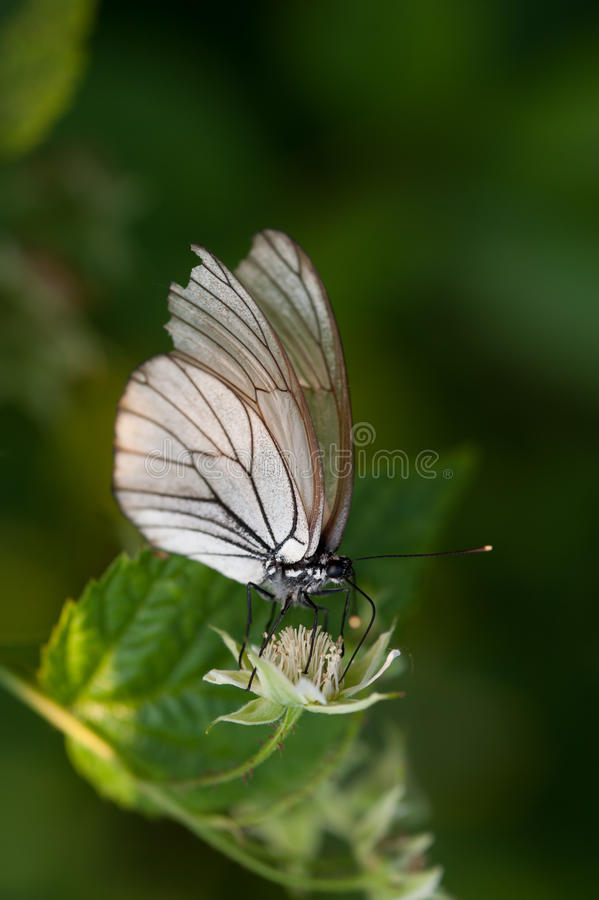 Download Butterfly close up stock image. Image of butterflies - 31811027