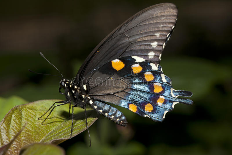 Butterfly closeup. stock photo