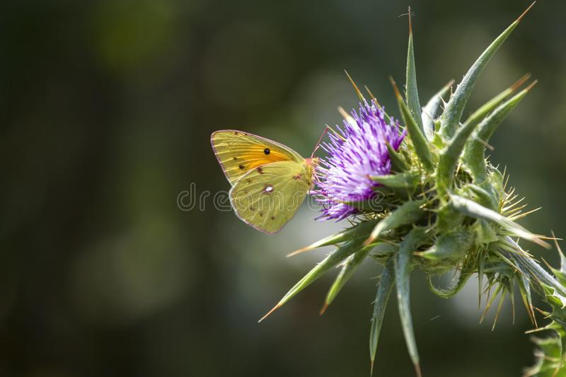 Butterfly closeup macro in nature royalty free stock photography