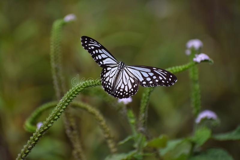 A Butterfly collecting nectar stock images