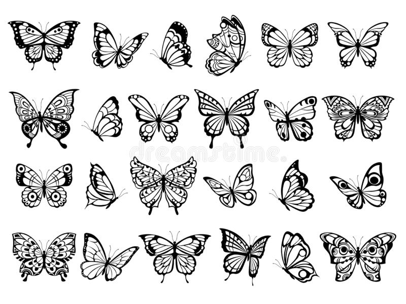 Butterfly collection. Beautiful nature flying insect drawing, exotic black butterflies with funny wings vector pictures vector illustration