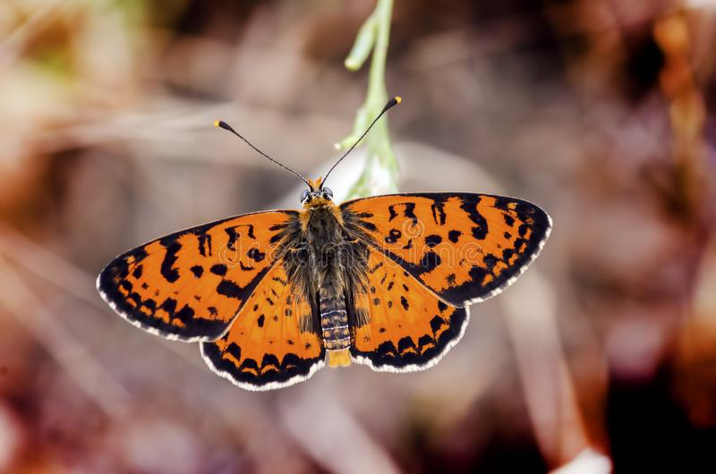 Butterfly in nature stock image