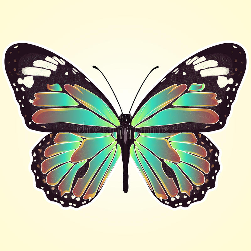 Butterfly with colorful wings, view from above, isolated on light yellow background. Vector illustration, banner, card, poster, fl. Butterfly with colorful wings vector illustration