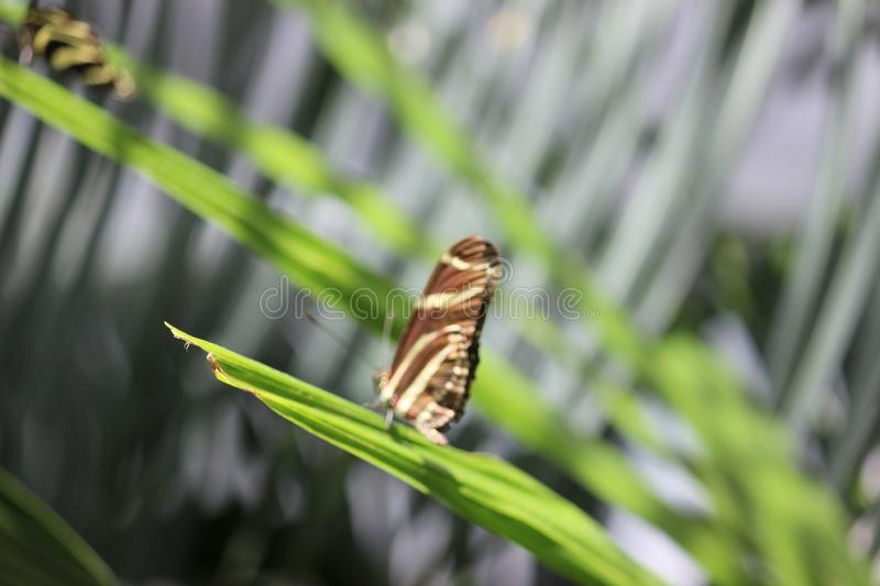 Butterfly Conservatory near Niagara falls in Canada. Discover thousands of freely flying exotic butterflies in a lush tropical garden.Located on the grounds of royalty free stock photos