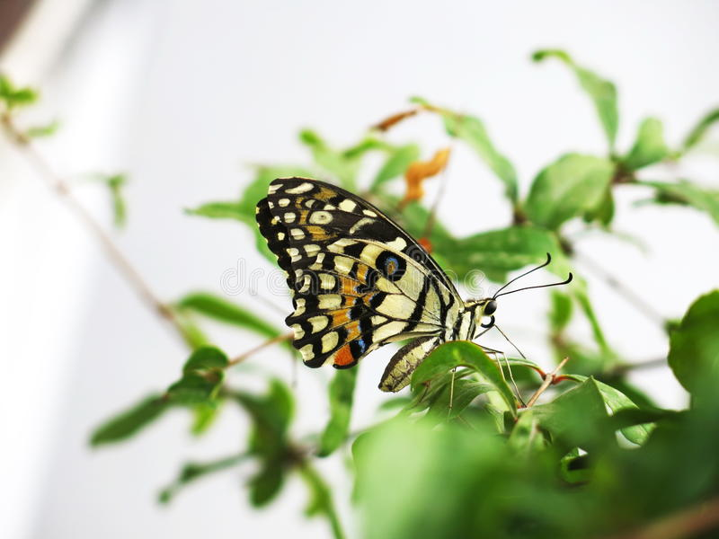 `The butterfly counts not months but moments, and has time enough.` royalty free stock photos