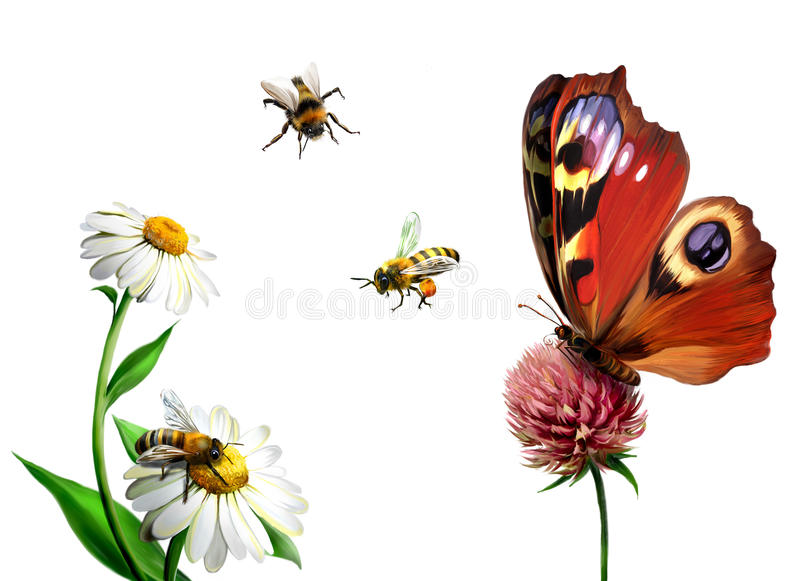 Butterfly, daisy, and Bees royalty free illustration