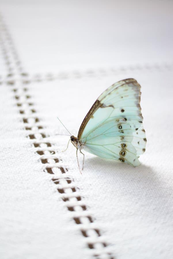 Butterfly dream stock photos