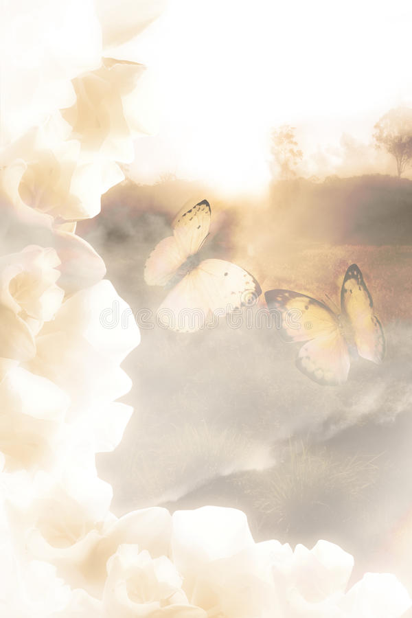 Download Butterfly Dreams stock photo. Image of fond, butterfly - 14297306