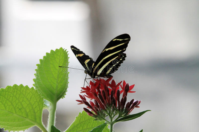 Butterfly eating stock images