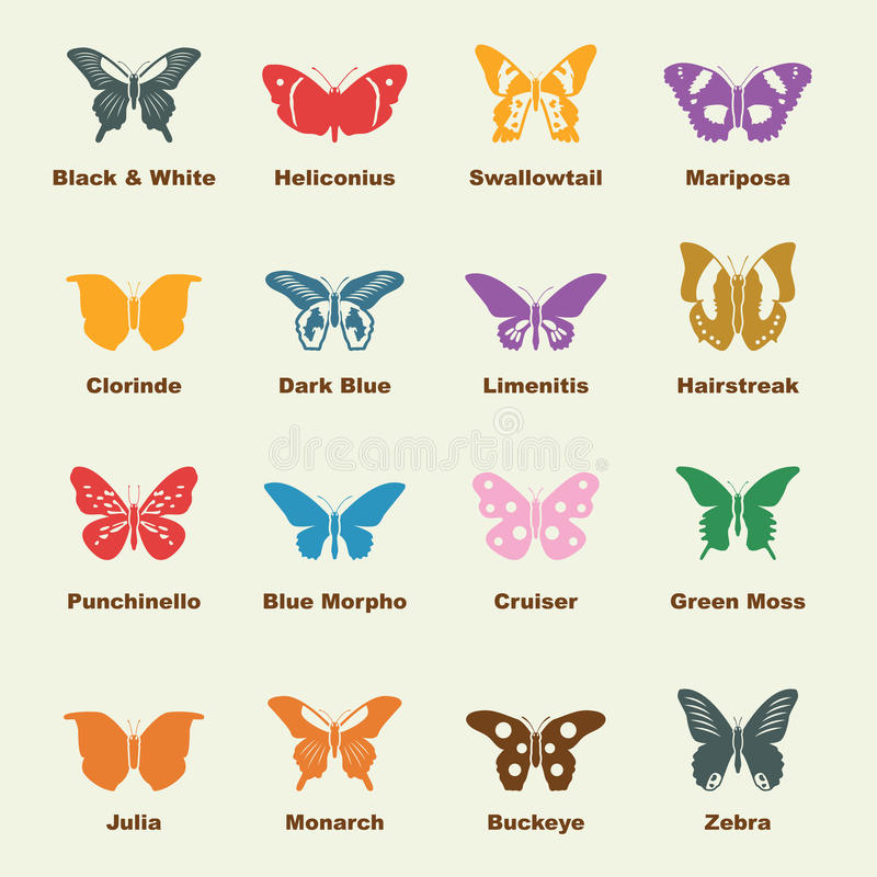 Butterfly elements. Vector infographic icons vector illustration