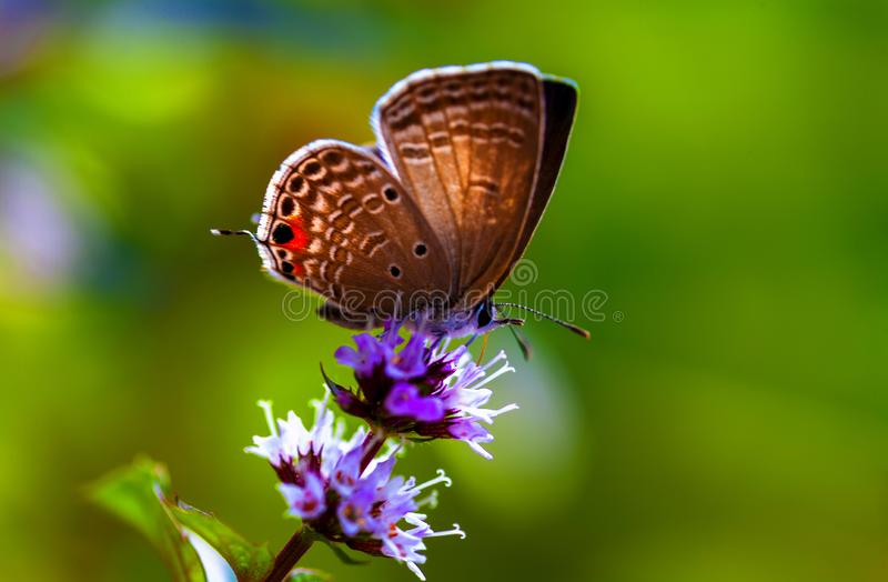 A butterfly settled on the flower. The butterfly is enjoying the food   in spring time stock images