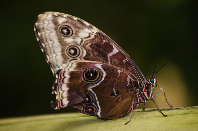 Butterfly eyespots. Wild colorful forest stock images