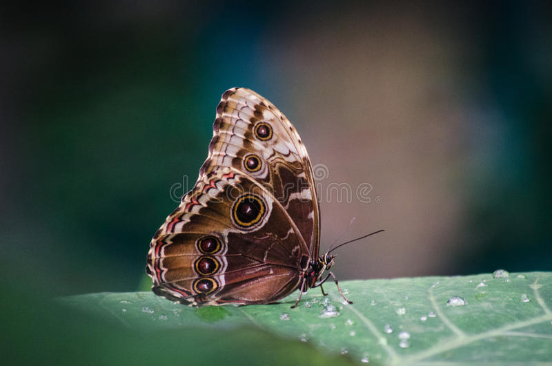 Butterfly eyespots. Wild colorful forest stock photo