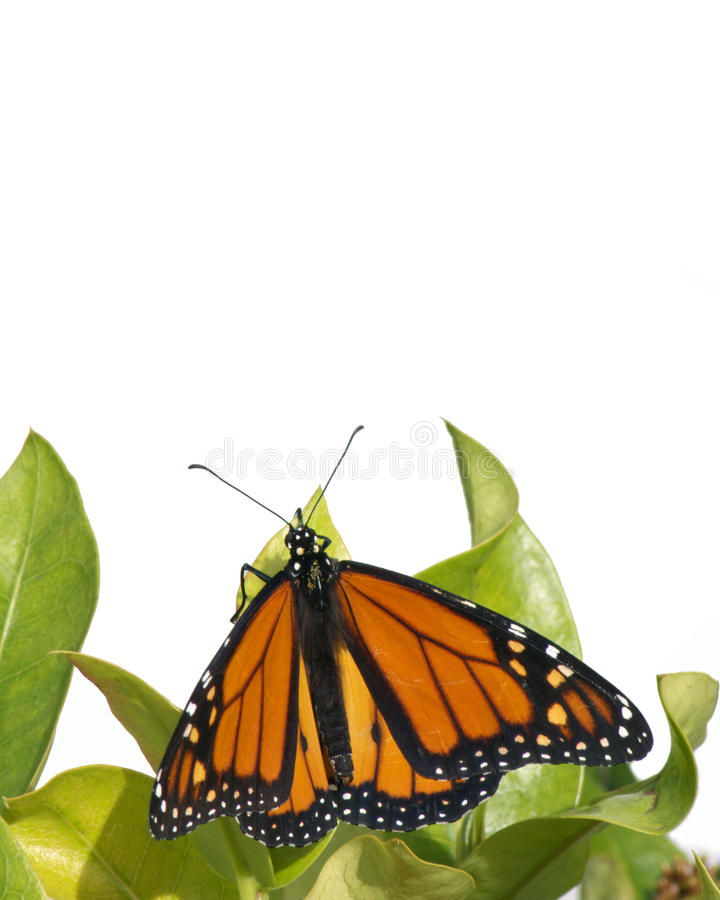 Butterfly facing up stock photo