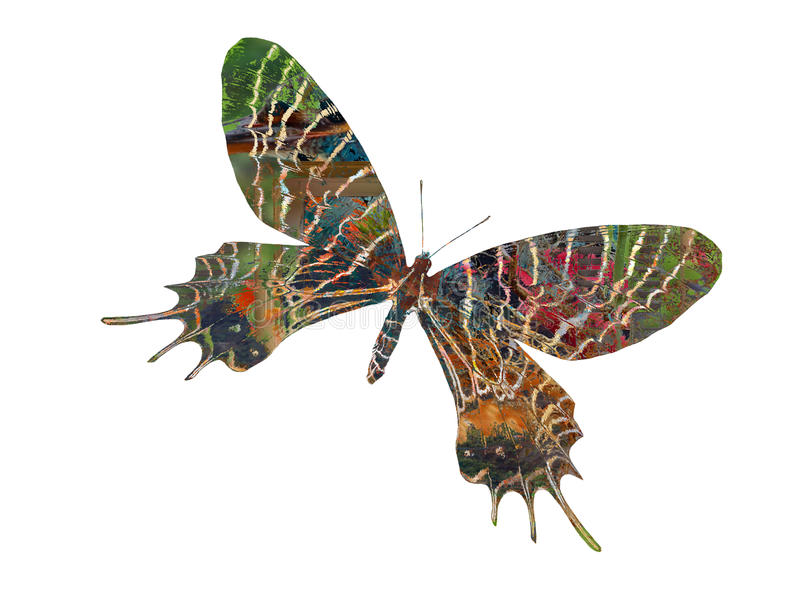 Butterfly fantasy stock image