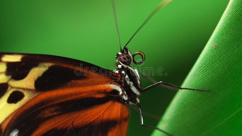 Butterfly feeding on flowers in a Summer garden.  stock images
