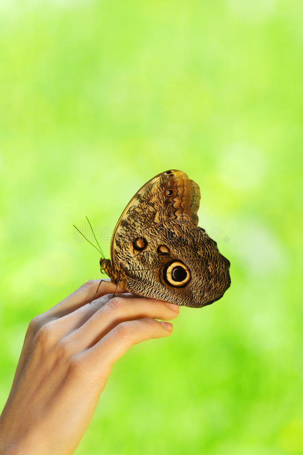 Download Butterfly on a female hand stock photo. Image of luminous - 32598392
